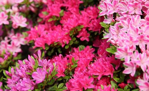Blütenpracht: Im Sommer kann ein Garten in allen Farben leuchten.